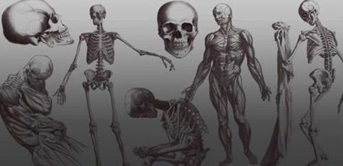 photoshop brushes skeletons by ars grafik
