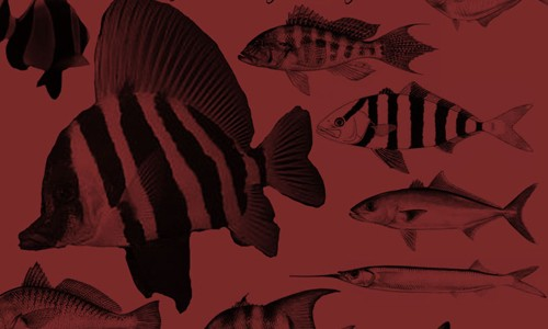 fish brushes cs2