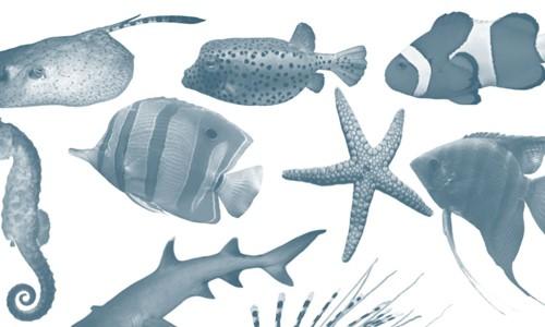 fish-brushes photoshop