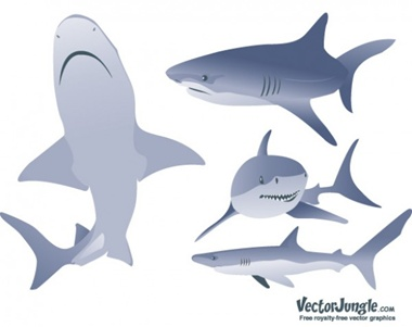 creative,design,download,illustration,illustrator,images,new,original,pack,photoshop,vector,web,modern,unique,vectors,ultimate,icons,quality,fresh,high quality,vector graphic,silhouettes,realistic,sharks vector