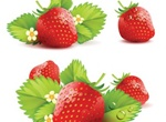 Delicious Juicy Red Strawberries Vector