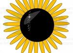 Vector Sunflower Symbol
