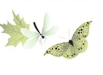 Delicate Butterfly Leaf Dragonfly Vector