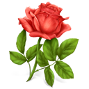 Flower, Plant, Rose Icon